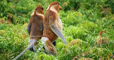107 Tempat Wisata di Kalimantan Utara Paling Menarik dan Wajib Dikunjungi