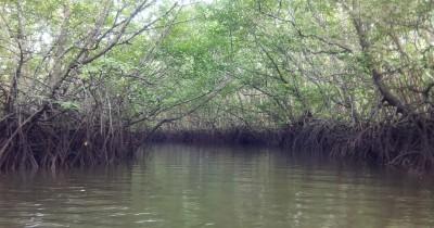 Hutan Mangrove Sungai Dompak, Wisata Alami di Kepulauan Riau