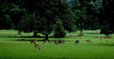 Belajar Sambil Berlibur ke Kebun Raya Bogor