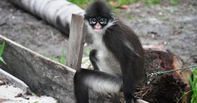 Wisata Fauna Kekah, Ikon Natuna Yang Diambang Kepunahan