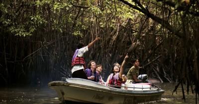 Bintan Mangrove, Pesona Keindahan Hutan Bakau yang Wajib Dikunjungi di Bintan
