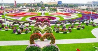 Menikmati Keindahan Kebun Bunga Bak Pelangi di Taman Bunga Nusantara, Cianjur Jawa Barat
