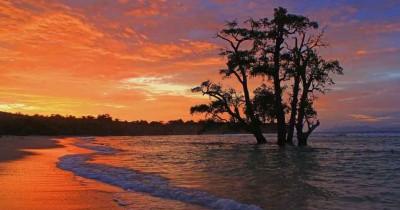 Pantai Lhok Mee, Keindahan Pasir Putih dan Pohon Dalam Air