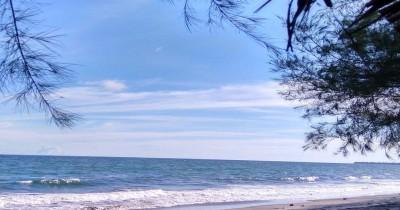Pantai Cemara Indah, Keunikan Pantai Dengan Deretan Pohon Cemara