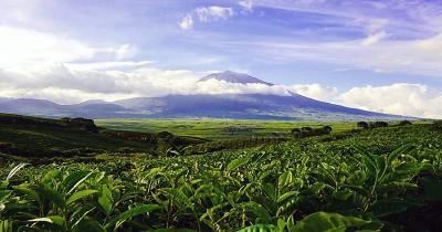 Perkebunan Teh Kayu Aro, Keindahan Kebun Teh dengan Background Gunung Kerinci