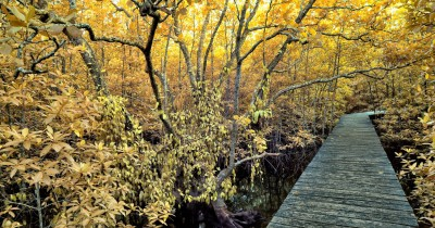 Mangrove Sei Carang, Wisata Hutan Mangrove yang Terkenal di Tanjungpinang