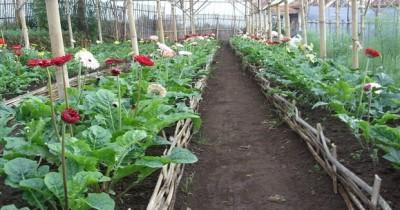 Agro Wisata Bunga Lumajang, Menyisir Berbagai Bunga yang Tumbuh Subur di Agro Wisata Lumajang