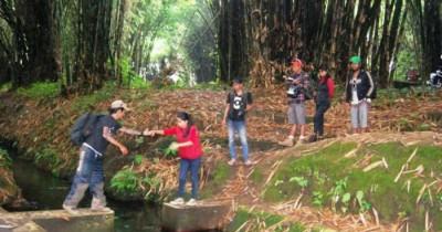 Hutan Bambu, Mari Melihat Ratusan Kera yang Terdapat di Hutan Bambu Lumajang