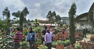 Taman Begonia, Tempat Hits di Bandung dengan Hamparan Bunga Warna Warni