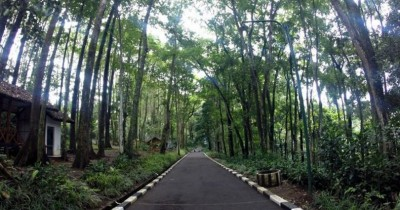 Taman Hutan Raya Juanda, Hutan dengan Wisata Komplit di Bandung