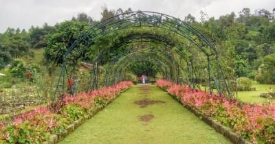 Kebun Mawar Situhapa, Taman Bunga Terbesar di Garut  dengan Suasana yang Segar nan Sejuk