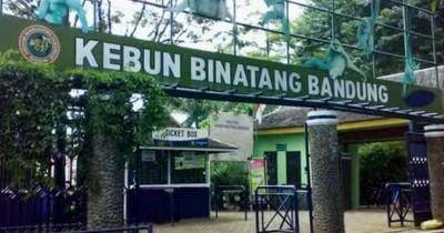 Kebun Binatang Bandung, Tempat Berlibur Asyik Melihat Satwa Bersama Keluarga