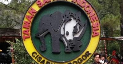 Taman Safari Bogor, Tempat Berkumpulnya Satwa Menggemaskan
