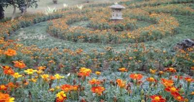Melrimba Garden, Menikmati Wisata di Hamparan Bunga yang Cantik