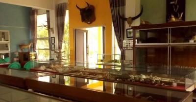 Museum Zoologi Frater, Berwisata Sambil Mempelajari Biota Laut