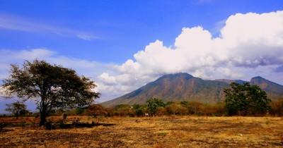 Savana Bekol, Menikmati Eksotisnya Pemandangan Seperti di Afrika