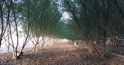 Pantai Cemara, Menilik Obyek Wisata Baru di Banyuwangi