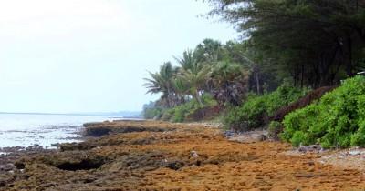 Pantai Batu Kerbuy, Melihat Indahnya Hamparan Batu Karang yang Cantik