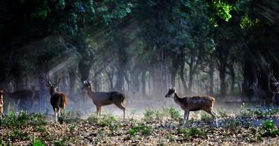 Penangkaran Rusa Maliran, Berwisata Sambil Berinteraksi dengan Rusa-rusa