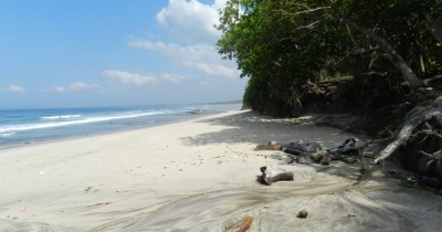 Pantai Ngagelan, Asiknya Melepas Tukik Bersama-sama ke Lautan