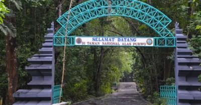 Wisata Taman Nasional Alas Purwo, Menelusuri Hutan Tertua di Pulau Jawa