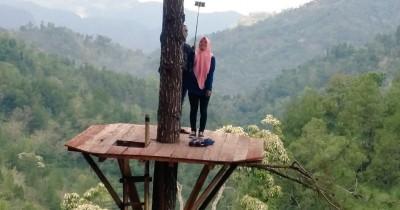 Pinus Kita Gemaharjo, Berwisata Sambil Melihat Pemandangan Hutan Pinus dari Ketinggian