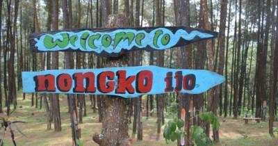 Hutan Pinus Nongko Ijo, Salah Satu Tempat Selfie Menarik di Madiun