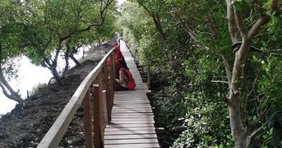Hutan Mangrove Ujungpangkah, Wisata Murah Meriah di Gresik