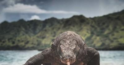 Taman Nasional Komodo : Fasilitas, Rute, Jam Buka, Harga Tiket dan Daya Tarik