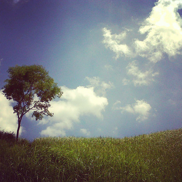 Bukit Campuhan